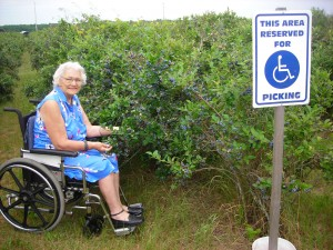 Blueberry picking is accesible for all.