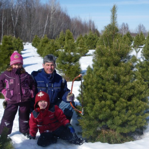 Cut your own Christmas trees in Pembroke
