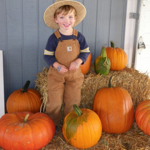 Pick your own pumpkins in Pembroke