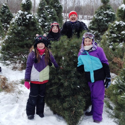 Cut your own Christmas trees in Pembroke.