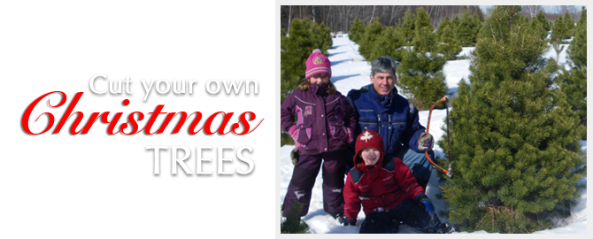 Make Christmas memories atblueberryranch.canch when you cut your own trees